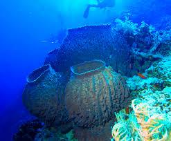 Barrel Sponge - PP Island
