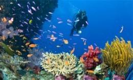 Dive Sites - Phuket
