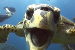 Turtle Away