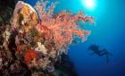 Diver along Drop