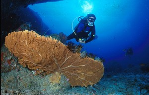 Diver and Gorgonia at Deep Six Similan Islands